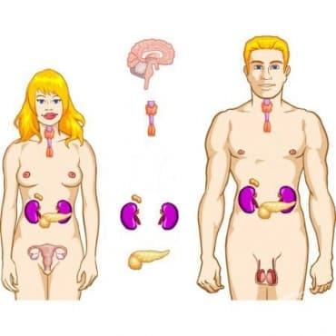 Болести на ендокринната система, разстройства на храненето и на обмяната на веществата МКБ E00-E90 - изображение
