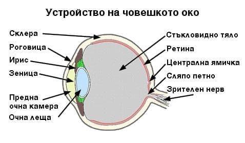 Болести на стъкловидното тяло и очната ябълка МКБ H43-H45 - изображение