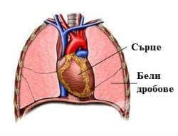 Отмиране и отхвърляне на сърдечно-белодробен трансплантат МКБ T86.3 - изображение