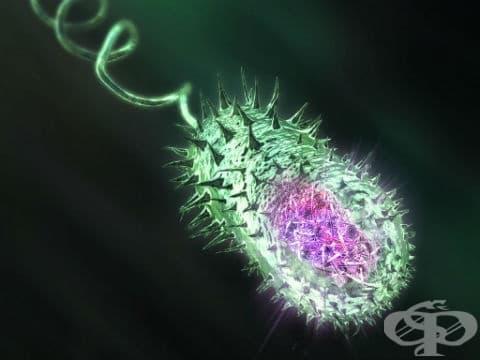 Холера, неуточнена МКБ A00.9 - изображение