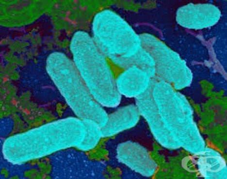 Инфекция, предизвикана от Haemophilus influenzae, неуточнена МКБ A49.2 - изображение
