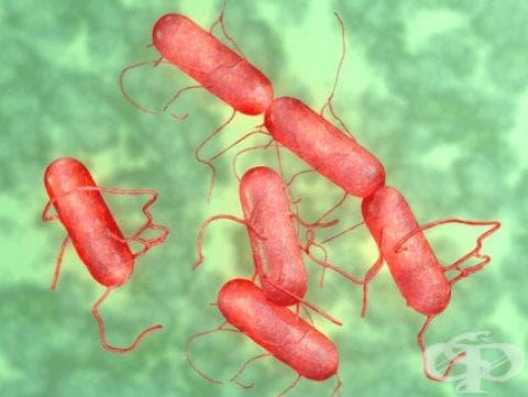 Локализирана салмонелозна инфекция МКБ A02.2 - изображение