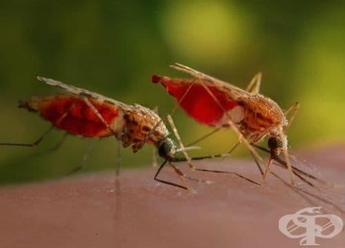 Малария, предизвикана от Plasmodium vivax МКБ B51 - изображение