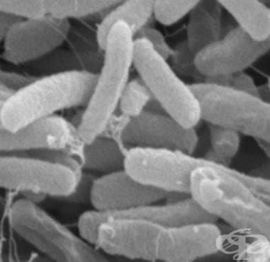 Менингит, предизвикан от други бактерии МКБ G00.8 - изображение