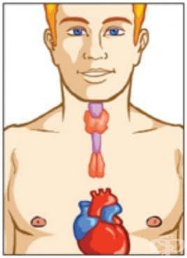 Миопатия при ендокринни болести МКБ G73.5 - изображение