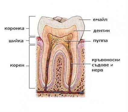 Нарушения в развитието и никненето на зъбите МКБ K00 - изображение