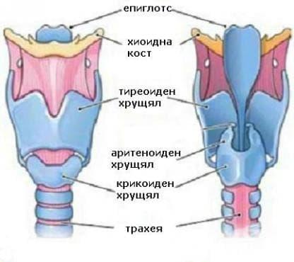 Навяхване и разтягане на свързващия апарат в областта на щитовидната жлеза МКБ S13.5 - изображение
