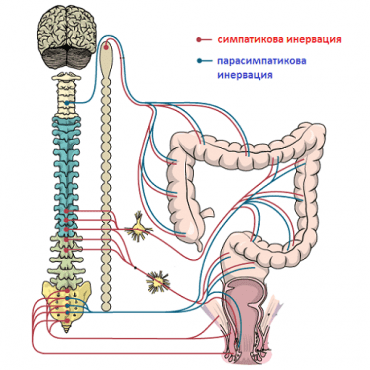 Неврогенни черва, некласифицирани другаде МКБ K59.2 - изображение