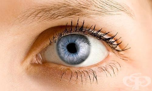 Други болести на окото и придатъците му МКБ H55-H59 - изображение