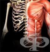 Полиневропатия при други костно-мускулни увреждания (М00-М25ї, М40-М96ї) МКБ G63.6 - изображение