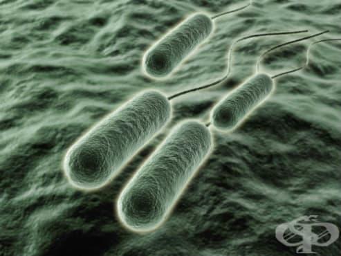 Pseudomonas (aeruginosa)(mallei)(pseudomallei) като причина за болести, класифицирани другаде МКБ B96.5 - изображение