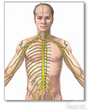Разстройство на вегетативната [автономната] нервна система, неуточнено МКБ G90.9 - изображение