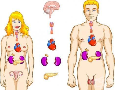 Разстройства на други ендокринни жлези МКБ E20-E35 - изображение