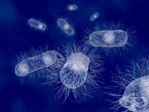 Шигелоза, предизвикана от Shigella dysenteriae МКБ A03.0 - изображение