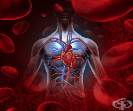 Вродени аномалии на системата на кръвообращението МКБ Q20-Q28 - изображение