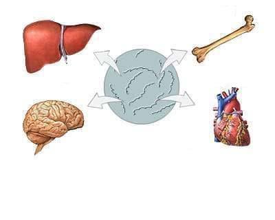 Други форми на вторичен сифилис МКБ A51.4 - изображение