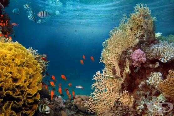 Токсичен ефект от контакт с риба МКБ T63.5 - изображение