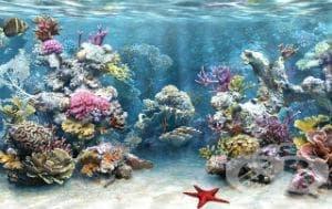 Токсичен ефект от контакт с други морски животни МКБ T63.6 - изображение