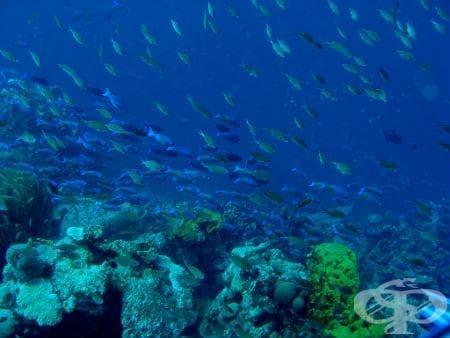 Токсично въздействие на отровни вещества, съдържащи се в изядени хранителни морски продукти МКБ T61 - изображение