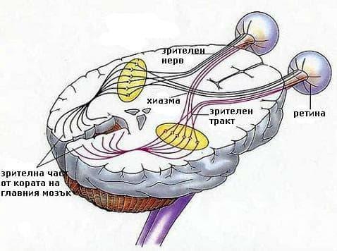 Травма на зрителния нерв и зрителните пътища МКБ S04.0 - изображение