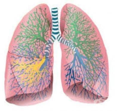 Туберкулоза на белите дробове, потвърдена само с културелен растеж МКБ A15.1 - изображение