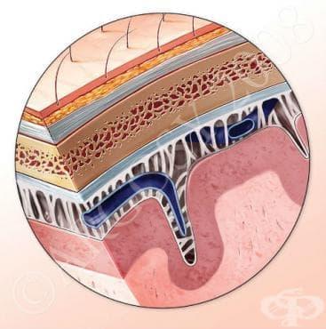 Увреждания на обвивките на главния мозък, некласифицирани другаде МКБ G96.1 - изображение