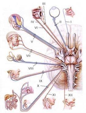 Увреждания на отделни нерви, нервни коренчета и плексуси МКБ G50-G59 - изображение