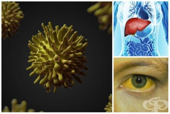 Вирусен хепатит, неуточнен МКБ B19 - изображение