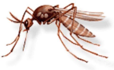 Вирусен енцефалит, предаван  от комари МКБ A83 - изображение