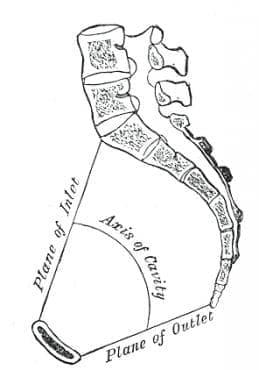 Затруднено раждане поради други аномалии в таза на майката МКБ O65.8 - изображение