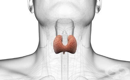 Злокачествени новообразувания на щитовидната и други ендокринни жлези МКБ C73-C75 - изображение