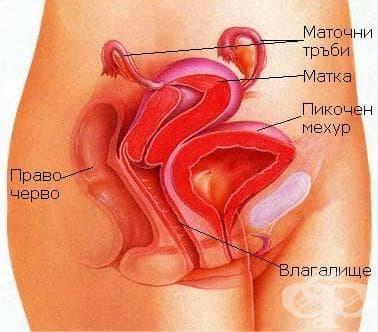 Злокачествено новообразувание  на тялото на матката МКБ C54 - изображение
