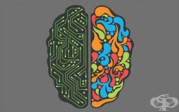 Лявото и дясното полукълбо на човешкия мозък не са във вечна опозиция - изображение