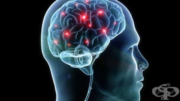 Човешкият мозък продължава да работи и след спиране на сърдечната дейност - изображение