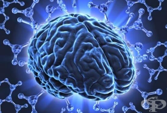 Създадоха ново лекарство за стимулиране на мозъка - изображение