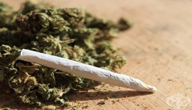 В България употребата на марихуана добива почти епидемични размери - изображение