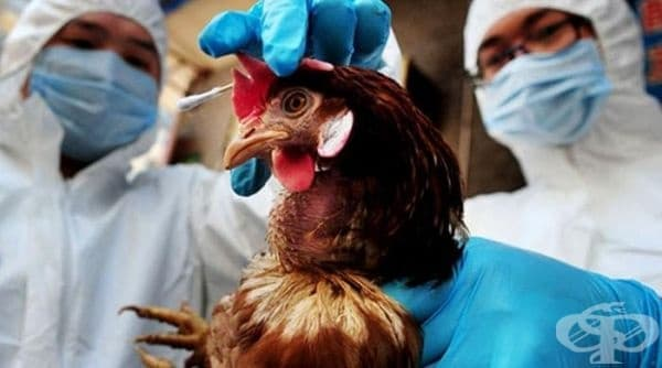 Създадоха междуведомствен Национален оперативен щаб, който ще ликвидира заболяването по птиците - изображение