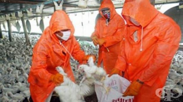 Констатирано е 15-то огнище на заболяването птичи грип - изображение