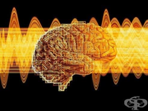 Учени изследваха интересна връзка между човешките черва и мозъка - изображение