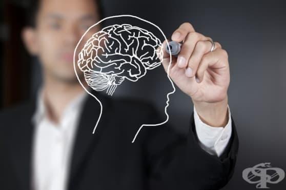 Мозъкът може да елиминира бактериалните инфекции - изображение
