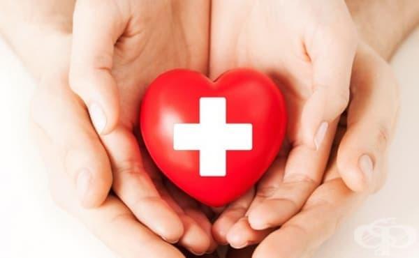 Значително малък е броят на българите, които не биха станали донори на органи - изображение