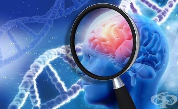 Природни химикали могат да се окажат естествена защита от развитие на болестта на Алцхаймер - изображение