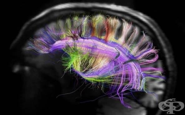 """Според ново изследване на Института """"Дюк"""" окситоцинът засилва духовността - изображение"""