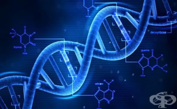 Руски учени откриха начин за опростяване на процедурата за промяна на генома - изображение