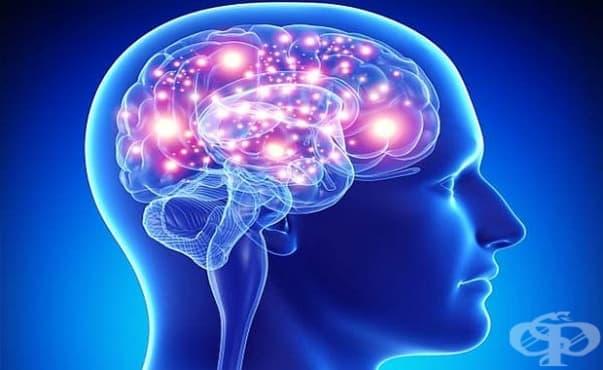 Учени откриха начин за увеличаване на умствените способности - изображение
