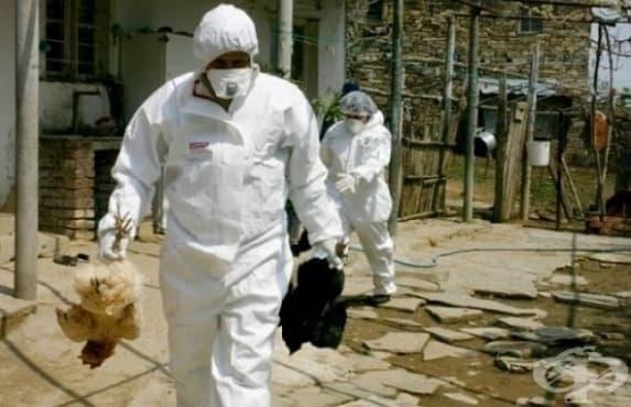 Откриха птичи грип в четири области от страната - изображение