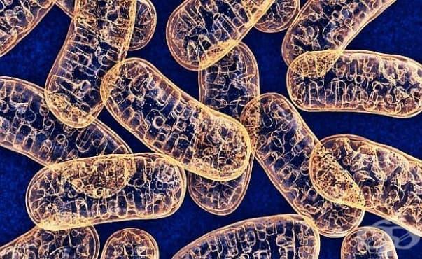 Учени откриха редки случаи на предаване на митохондриална ДНК от бащата на потомството - изображение