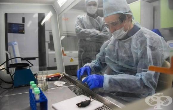 В Русия започват тестове върху трансгенни мишки на ваксина срещу COVID-19 - изображение