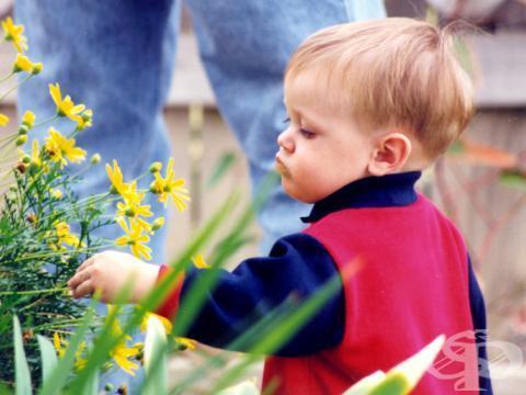 Нови правила за прием в детските градини във Варна - изображение
