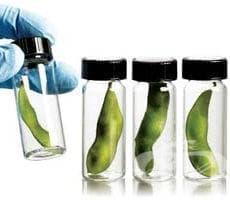 Информацията за последиците от ГМО не почива на солидни данни - изображение